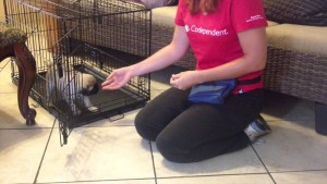 how to teach puppy go to crate o 300x169