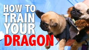 how to train your dragon pug pup 300x169